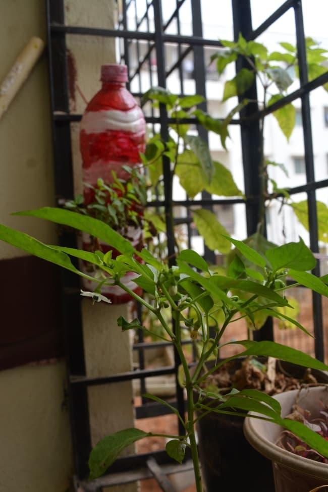 mintand greenchillies