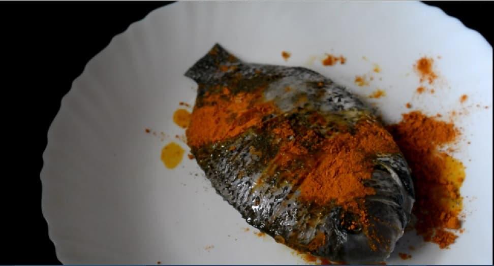 fishmollee2